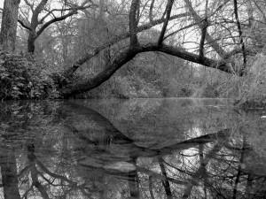 Redding_Creek